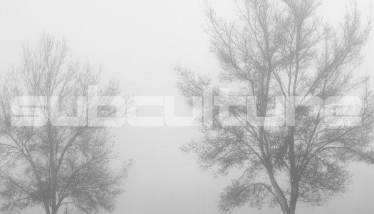 John O' Callaghan – Two Trees (subculture) Lançamento exclusivo